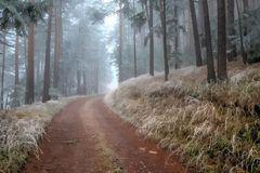 Zarter Winter