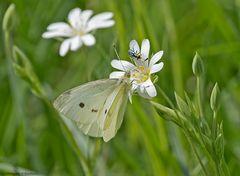 Zartes aus Flora und Fauna