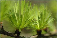 Zartes Frühlingsgrün