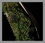 Zartes Grün