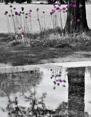 zartes lila