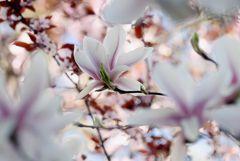 Zauber des Frühlings