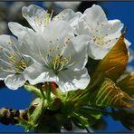 Zauber des Frühlings / La magia de la primavera