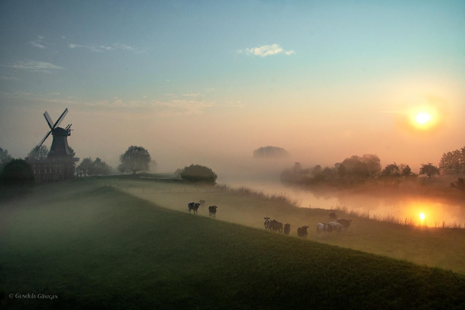 Zauber eines Morgens im Mai