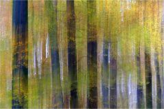 Zauber-Wald