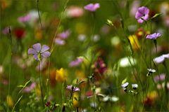 Zauberblüten..Blütenzauber
