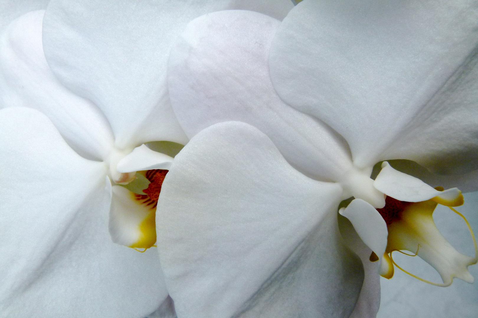 Zauberhafte Blüte