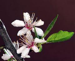 zauberhafte Blüten