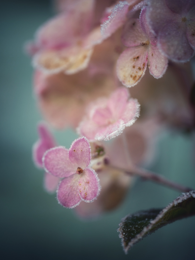 Zauberhafte Blütenwelt