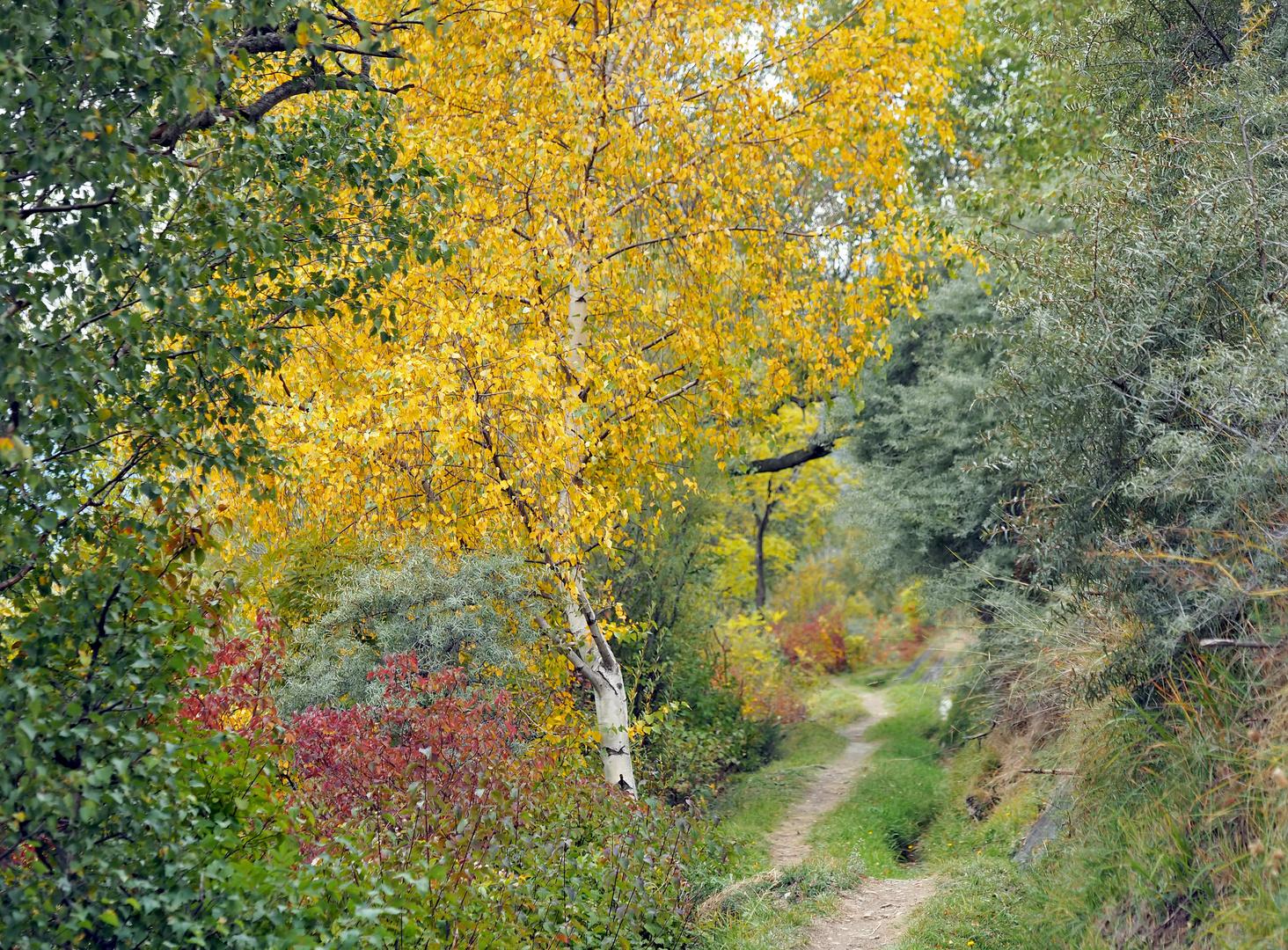 Zauberhafte Herbststimmung! - La poésie de l'automne!