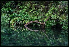 zauberhafter Urwald
