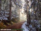 Zauberhafter Wallberg im Winter