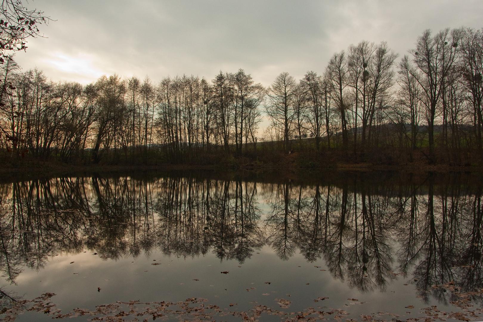 Zauberhaftes Licht gestern am Waldteich