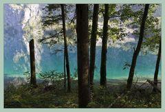 Zauberwald am Obersee