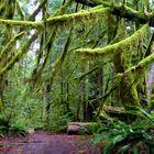Zauberwald im Olympic National Park