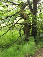 Zauberwald in grün....