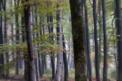 Zauberwald in Kell am See