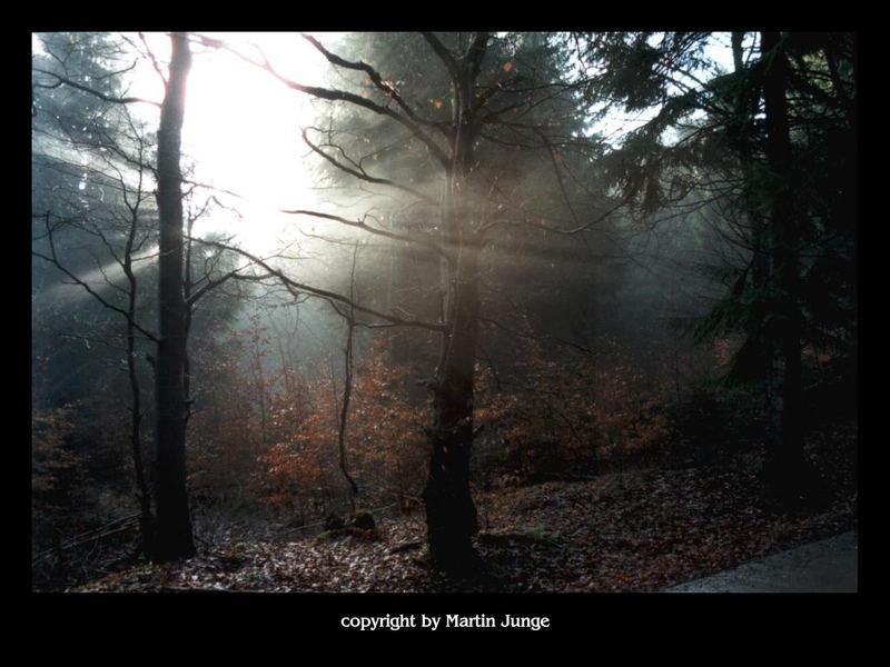 Zauberwald Nr.1