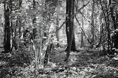 Zauberwald September