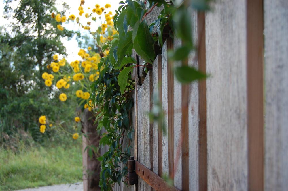 Zaun mit Strauch