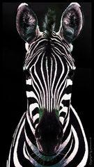 Zebra in schwarz und weiß und etwas Color