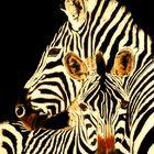 Zebra mit Fohlen