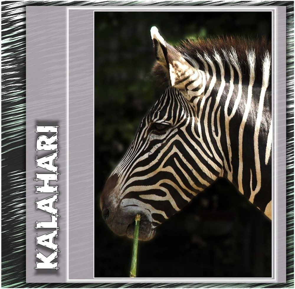      Zebra      Streifen     