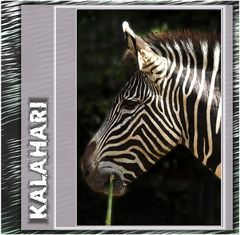 |||| Zebra |||| Streifen ||||