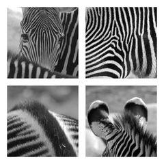 Zebra SW