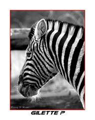 Zebra und Rasur