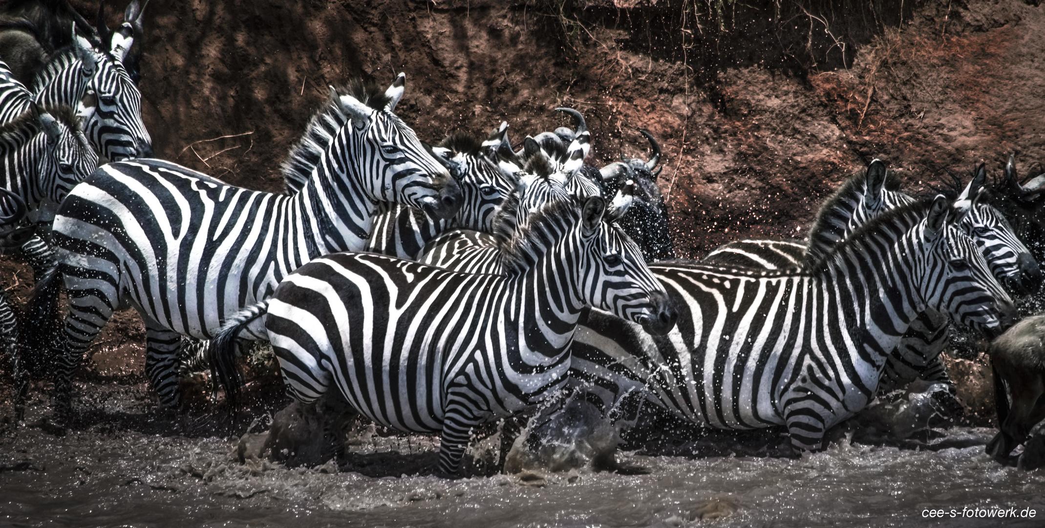 """Zebras im Fluss"""