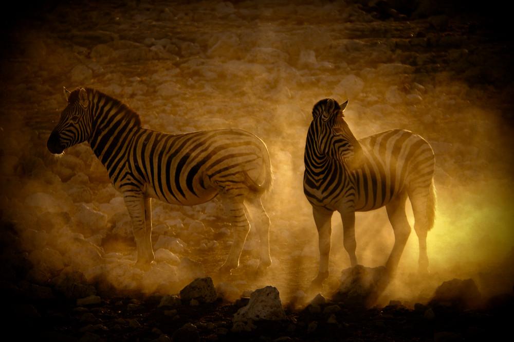 Zebras in der Dämmerung