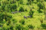 Zebras in saftig grüner Savannenlandschaft