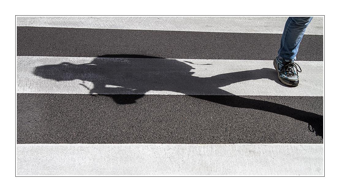 Zebraschattenläuferin
