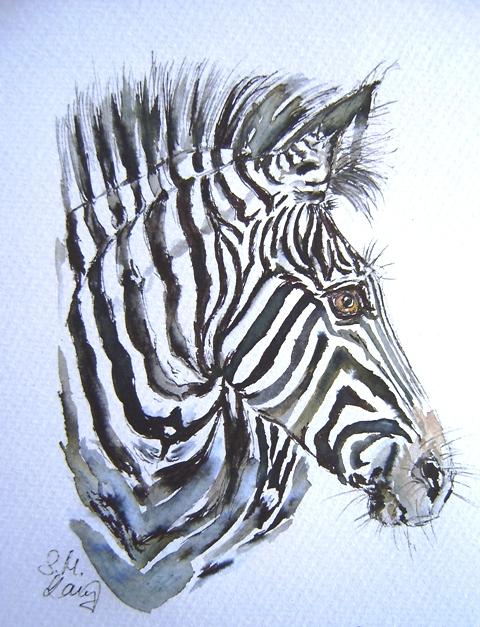 Zebraschönheit