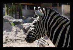 Zebrastreifen (2)