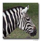 Zebrastreifen.....