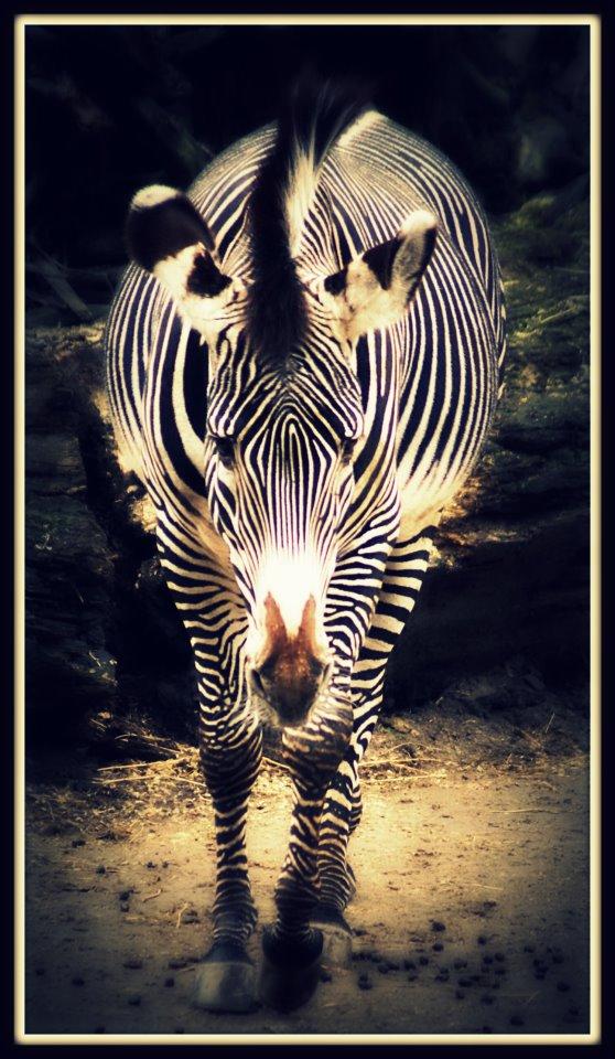 ... Zebrastreifen...