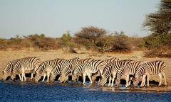 Zebrastreifen in Namibia...