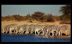 Zebrastreifen in Namibia Reload