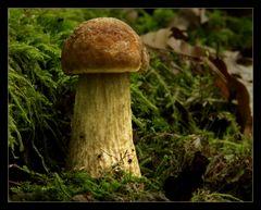Zeckenparadies Pilz