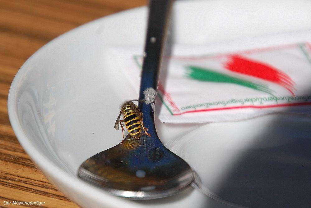 Zehn bis 40 Todesfälle gehen jedes Jahr laut Statistischem Bundesamt auf Insektenstiche zurück.