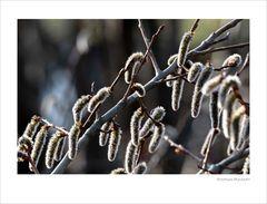 Zeichen des Frühlings 1