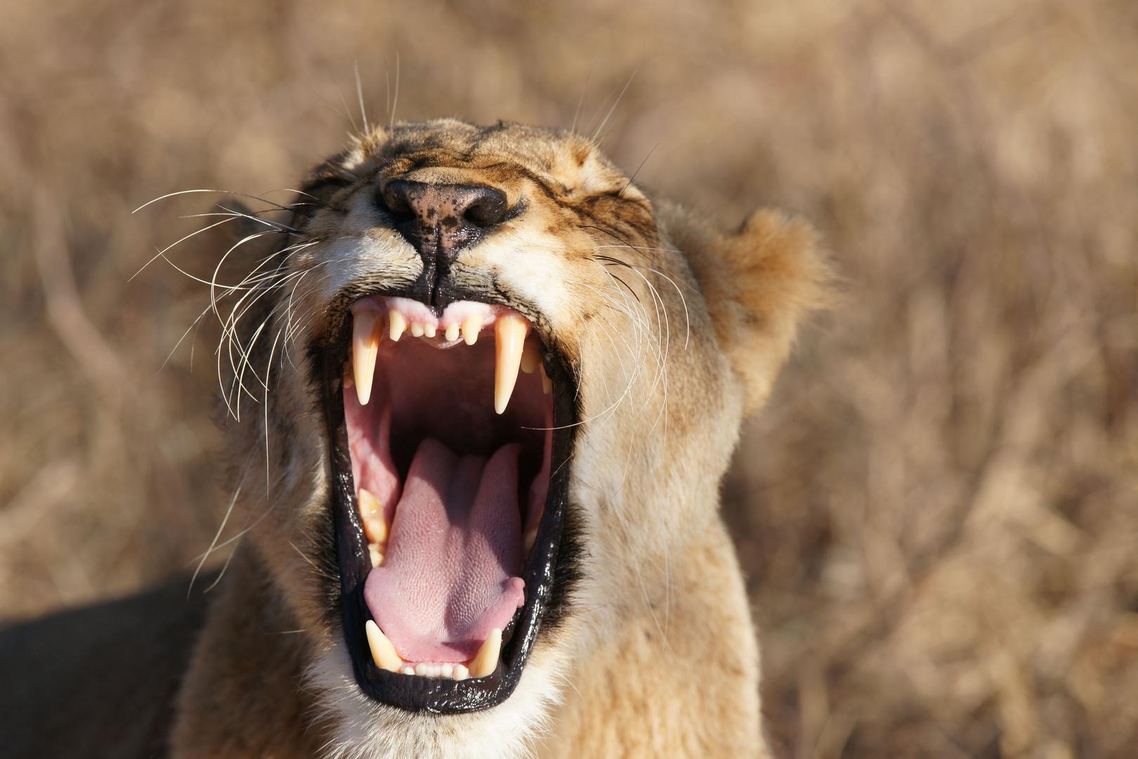 Zeig mir Deine Zähne.....