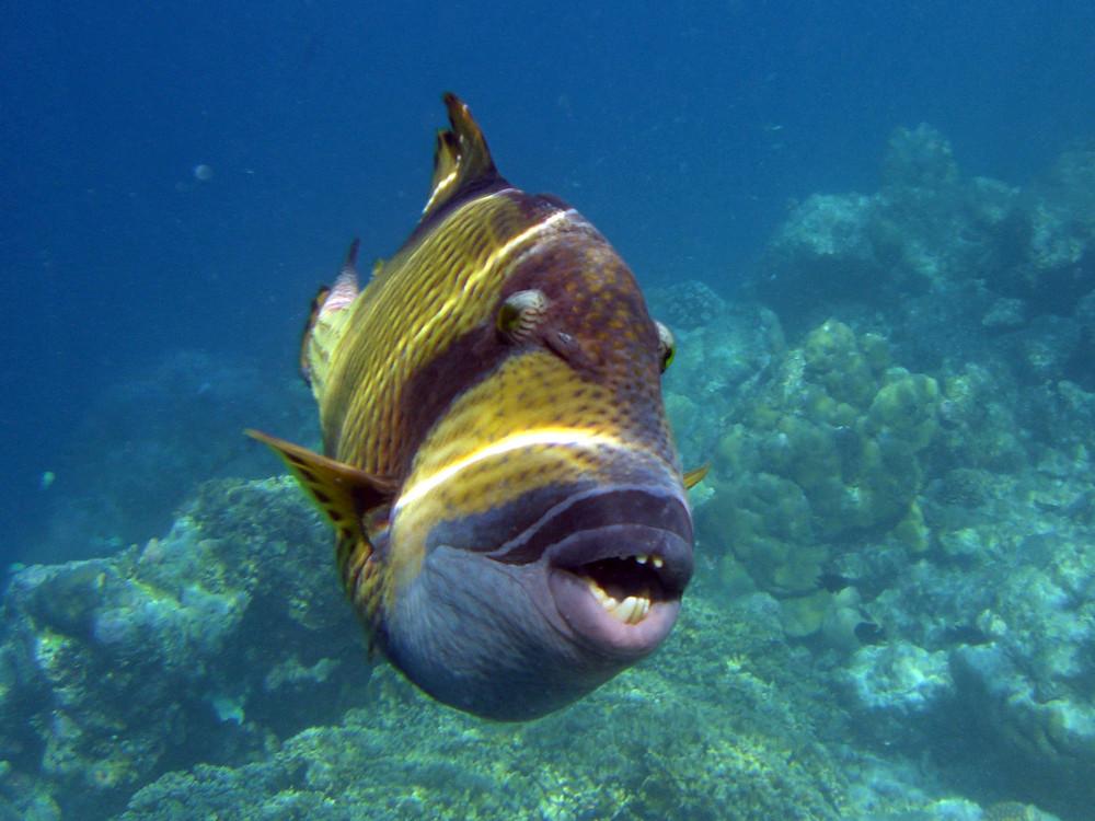 Zeig mir Deine Zähne, Fisch!