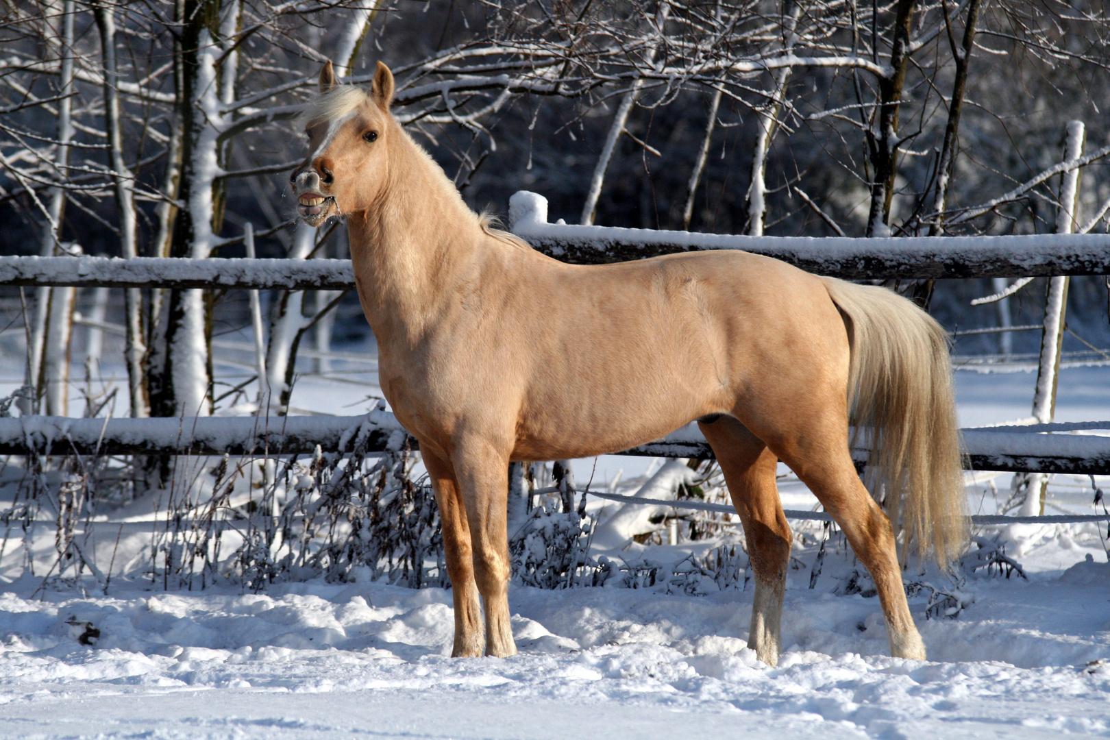 zeig mir deine z hne und ich sag dir wie alt du bist foto bild tiere haustiere pferde. Black Bedroom Furniture Sets. Home Design Ideas
