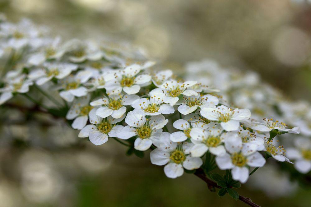Zeit der Blüte