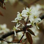 Zeit der Blüten...