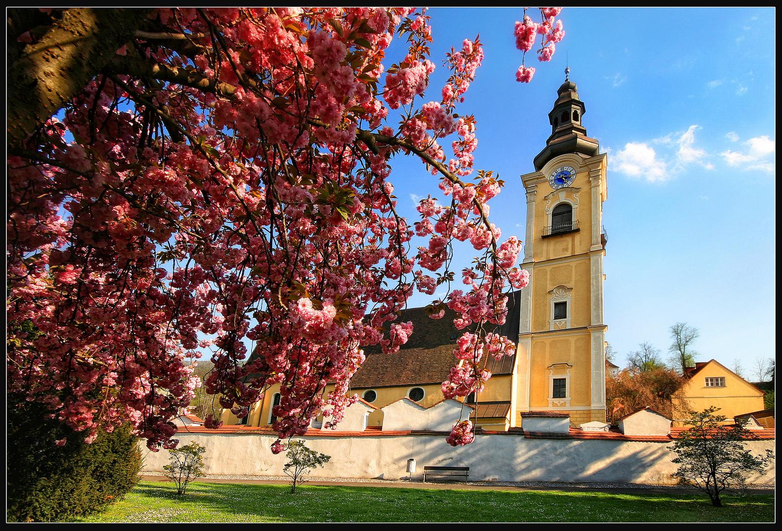 Zeit der Kirschblüte