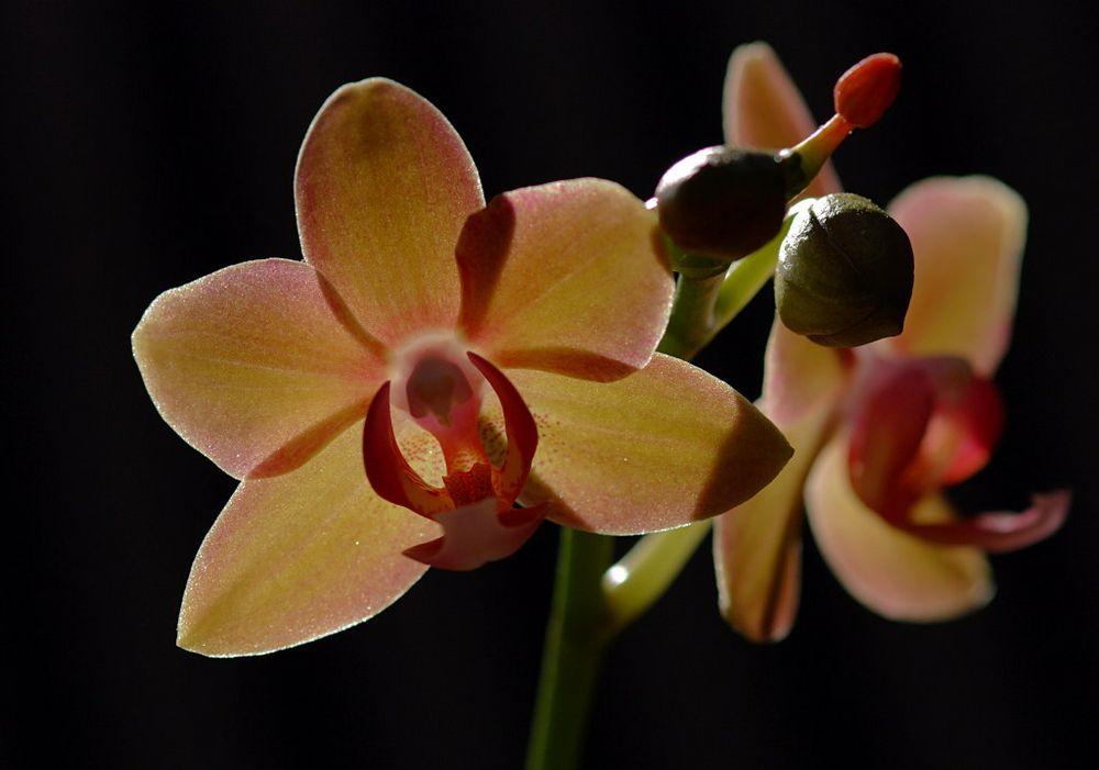 Zeit der Orchidee